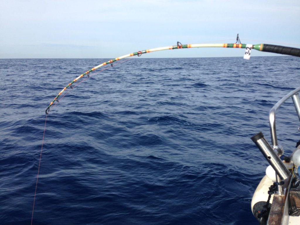 Cattura SS Lazio pesca